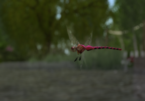 The dragonflies thrive by the pond
