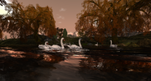 swanlake_003